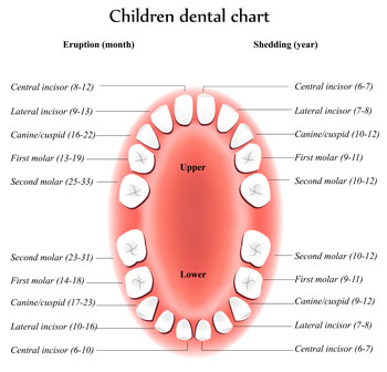 Tooth Eruption Chart - Pediatric Dentist in Colleyville, TX